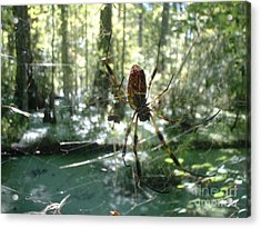 Hanging Loose Acrylic Print by Mark Robbins