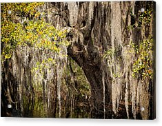Hanging Moss Acrylic Print by Denis Lemay