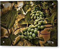 Hanging On A Vine Acrylic Print