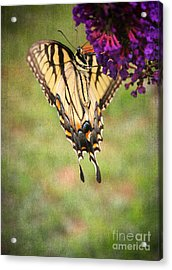 Hanging On Acrylic Print by Darren Fisher