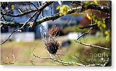 Hanging On Acrylic Print by Lorraine Louwerse