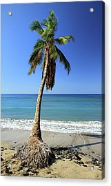 Hanging On Acrylic Print by Pierre Leclerc Photography