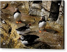Hanging Out Acrylic Print by Lee Dos Santos