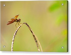 Hanging Out Acrylic Print by Rita Fuller