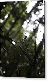 Hanging Spider Acrylic Print