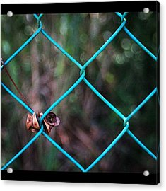 Hanging To The Fence, By My Lens Acrylic Print