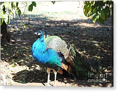 Haning In The Shade Acrylic Print by Rebbeca Alt