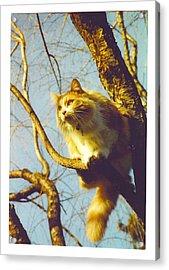 Hanserelli In Tree Acrylic Print