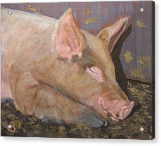 Acrylic Print featuring the painting Happy As A Pig by Joe Bergholm