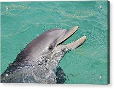 Happy Atlantic Bottlenose Dolphin Acrylic Print