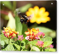 Acrylic Print featuring the photograph Happy Bee by Luana K Perez