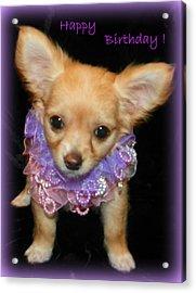 Happy Birthday Chihuahua Acrylic Print by Sheri McLeroy