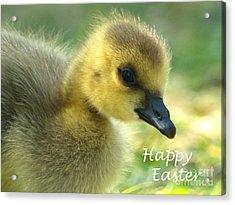 Happy Easter Gosling Acrylic Print