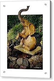 Happy Elephant Acrylic Print by Brian Wallace