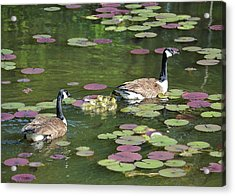 Happy Family Acrylic Print by Mary Zeman