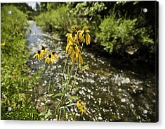 Happy Flowers Acrylic Print by Melany Sarafis