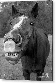 Happy Horse Acrylic Print by Christean Ramage