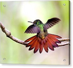 Acrylic Print featuring the photograph Happy by Susi Stroud