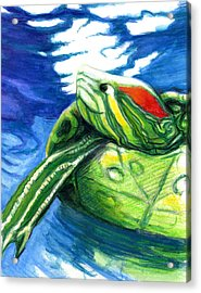 Happy Turtle Acrylic Print by Rene Capone