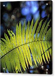 Hapu'u Fern Acrylic Print by G. Brad Lewis