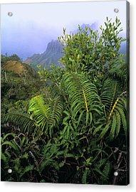 Hapu'u Ferns Acrylic Print by G. Brad Lewis