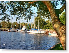Harbor Oak Acrylic Print by Barry Jones