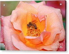 Acrylic Print featuring the photograph Hard At Work by Kathy Gibbons