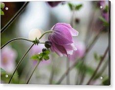 Hardy Grape Leaf Anemone Acrylic Print by   DonaRose