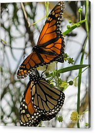 Acrylic Print featuring the photograph Harmony by Leslie Hunziker