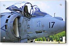 Harrier II Acrylic Print