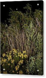 Harvest Moon Over Texas Plains Acrylic Print by Melany Sarafis