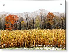 Harvest Snow Acrylic Print by Carolyn Postelwait