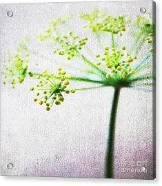 Harvest Starburst 2 Acrylic Print by Linda Woods