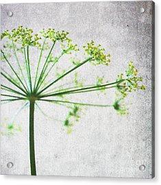 Harvest Starbust 3 Acrylic Print