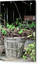 Harvest Time Acrylic Print by JC Findley