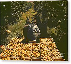 Hauling Crates Of Peaches Acrylic Print by Padre Art