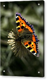 Acrylic Print featuring the photograph Having A Rest by John Chivers