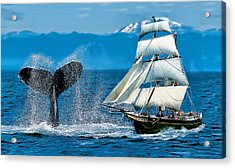 Having A Whale Of A Time Acrylic Print by Alex Hardie