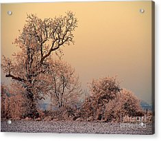 Frost 2 Acrylic Print by Linsey Williams