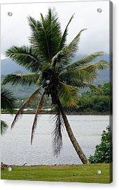 Hawaiian Palm Acrylic Print by Athena Mckinzie