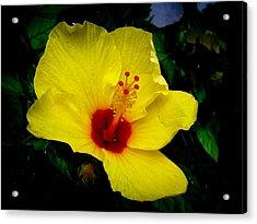 Hawaiian Yellow Hibiscus Acrylic Print by Athena Mckinzie