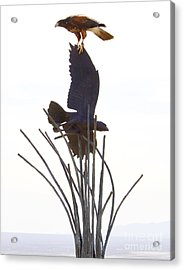 Acrylic Print featuring the photograph Hawk On Statue by Rebecca Margraf