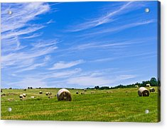 Hay Bales Under Brilliant Blue Sky Acrylic Print