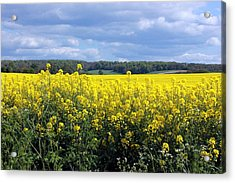 Hay Fever Acrylic Print by Rdr Creative