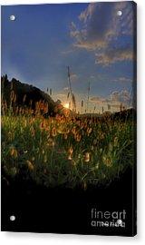 Hay Field Acrylic Print by Dan Friend
