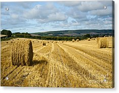 Hay Field Acrylic Print by Donald Davis