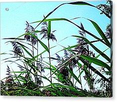 Hay In The Summer Acrylic Print by Pauli Hyvonen