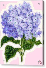 Acrylic Print featuring the digital art Hazy Hydrangea by Mary M Collins