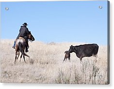 Head 'em Up Acrylic Print by Cindy Singleton