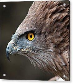 Head Of Eagle Acrylic Print